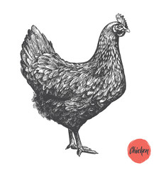 Chicken hand drawn illustration. Chicken meat and eggs vintage produce elements. Badges and design elements for the chicken manufacturing. Vector illustration.