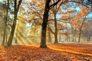 Morning sunrays in late autumn forest