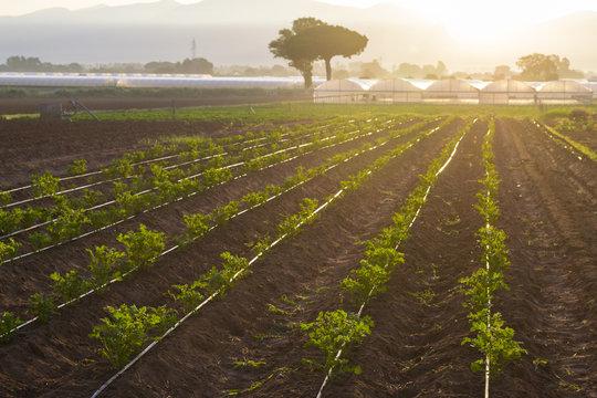coltivazioni biologiche in Italia