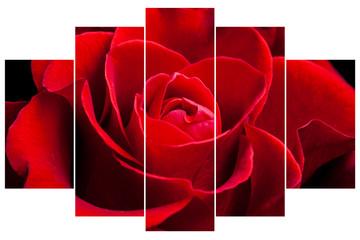 Floral wallpaper, Red rose collage. Interior design decoration idea