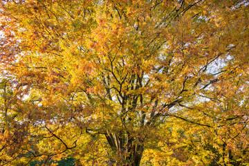 秋, 紅葉の木々