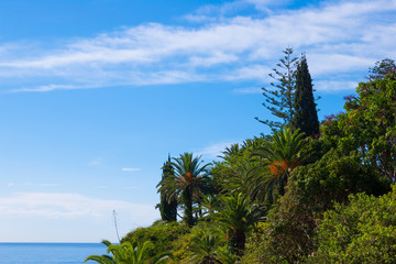 マデイラ島