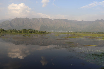 Dal Lake is integral to tourism & recreation in Kashmir and is named the Jewel in the crown of Kashmir, also an important source for commercial operations in fishing.