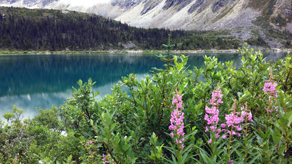 wild flowers at Upper Dewey Lake, Alaska