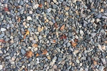 gravel with maple