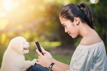 Asian beautiful woman hand holding smartphone and white puppy i