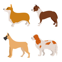 Collection of purebred dogs flat design