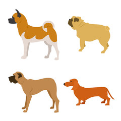 Set of purebred dogs isolated on white background
