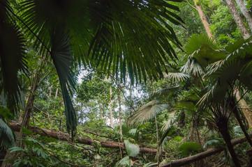 tropical jungles