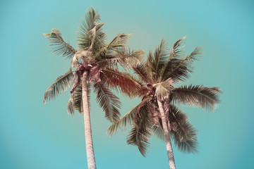 Vintage coconut palm tree with blue sky background