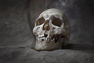 Human skull closeup detailed portrait. High resolution 50 megapixels image