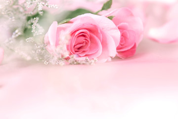 border of soft  Beautiful fresh sweet pink rose