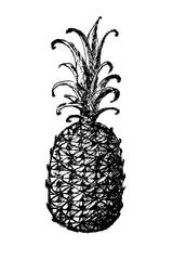 Pineapple, ink line drawing. Black sketch on white background
