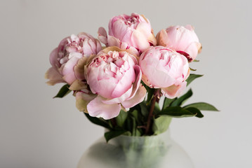 Close up of pink peonies in glass vase against neutral background (selective focus)