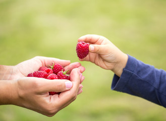 child taking raspberry