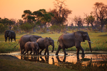 Elephants in Moremi Game Reserve - Botswana