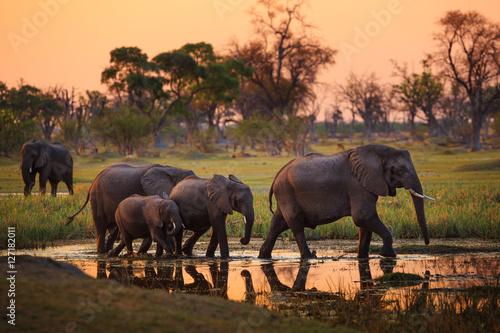 Elephants in Moremi Game Reserve - Botswana