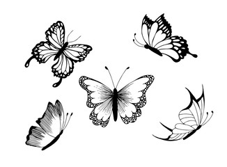 Set of butterfly. Vector image in black and white.
