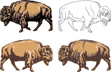 buffalo, color, black, illustration, isolation, figure, silhouette, portrait, various postures of the animal