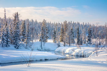 Beautiful Winter forest landscape  - trees covered snow and smal