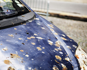 hood of car with lot of bird droppings, bad parking concept