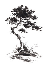 Ink illustration of growing pine tree with some grass. Sumi-e, u-sin, gohua painting stile. Silhouette made up of black brush strokes isolated on white background.