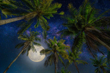 Wall Mural - Silhouette coconut palm tree with the full Moon and Milky way galaxy on night sky background.