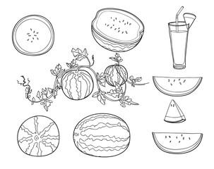watermelon set of hand drawn cute line art illustration vector