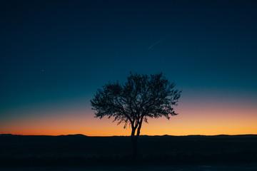 Arbol solitario al atardecer en un desierto