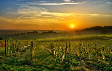 Foto auf Gartenposter Weinberg vineyard Bergerac two