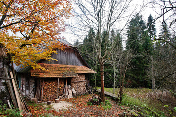 Old abandoned house wooden house on forest in autumn.