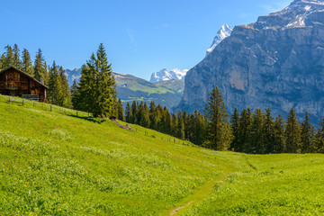 View of beautiful landscape in the Alps with fresh green meadows and snow-capped mountain tops in the background on a sunny day with blue sky.