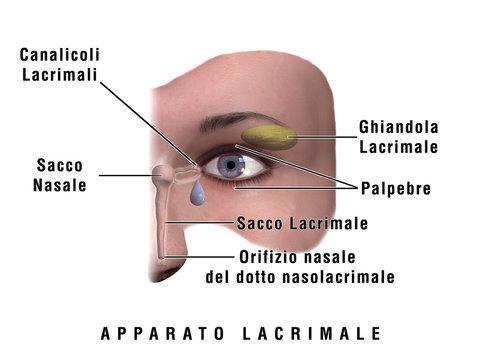 Occhio, Apparato Lacrimale, Medicina, Ottica, Ortottica, oculistica