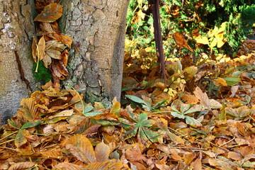 Laubberge im Herbst