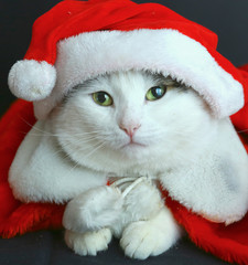 cat in santa hat and coat close up portrait
