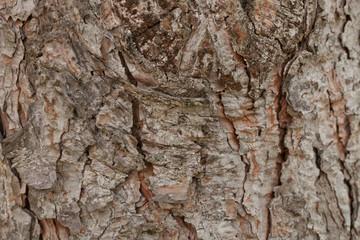 Corteza de corteza de pino virgen en Orlando