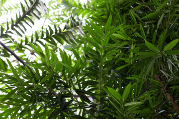 Tropical leaves in botanical garden, beautiful green background