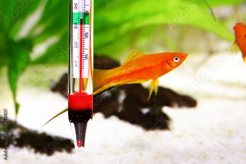 Aquarium thermometer temperature in tropical fish for Tropical fish temperature