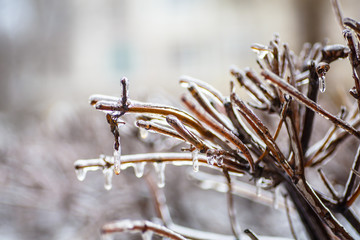 Freezing rain, when frost is not snow, but rain, water freezes o