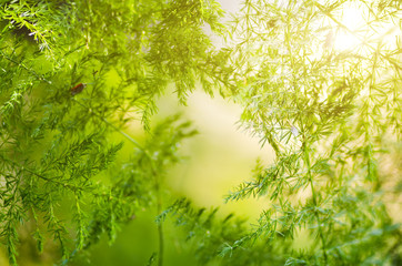 Natural defocused and depth of field (DOF) effect of green leaf, the bokeh effect and morning sunlight