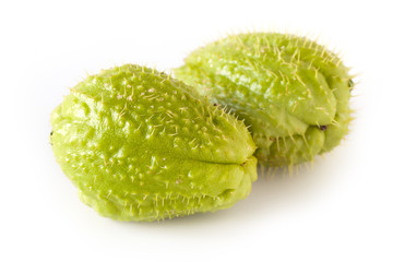 Chayote (Sechium Edule), edible plant belonging to the gourd family. Is known also as christophene or christophine.