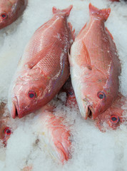 Red snapper fish at a market in California.