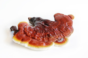 Red ganoderma on white background
