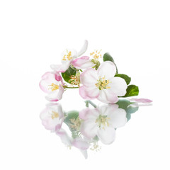White flowers poster, image with reflection