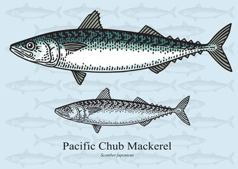Pacific Chub Mackerel. Vector illustration for artwork in small sizes. Suitable for graphic and packaging design, educational examples, web, etc.