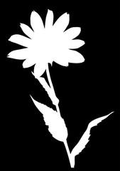 garden white large flower silhouette on black
