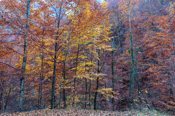 Colorful trees in the autumn