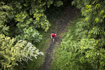 Athletic Asian man jogging on a forest trail.