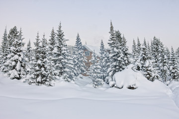 House under snow in winter wood chalet among spruce trees in the