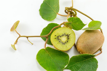 Freshly picked kiwi with branch and leaves